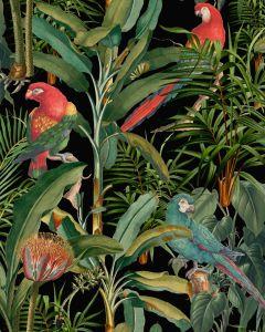 Set 3 role Tapet Imprimat Digital Parrots Of Brasil Anthracite